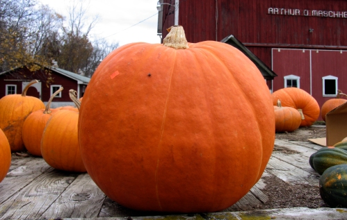 Pumpkin roadsid_5274