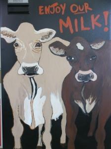 Calder cows_5644