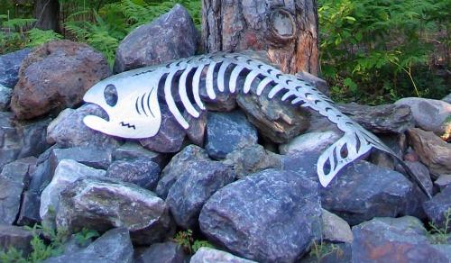 Lakenenland fish_3045