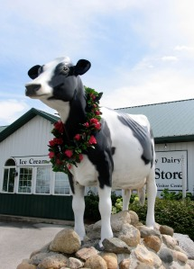 Welcome to Country Dairy