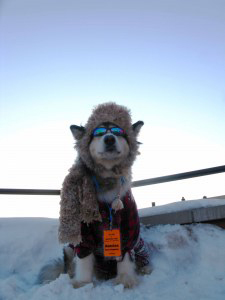 Banshee Dog, UP 200 mascot (TJ Kozak photo)