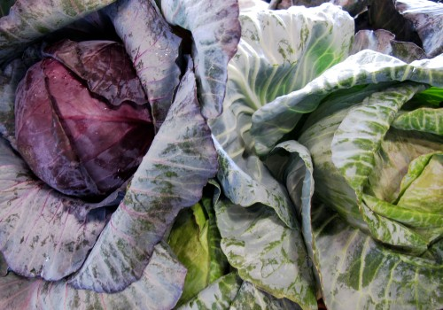 Sunday cabbage_4384
