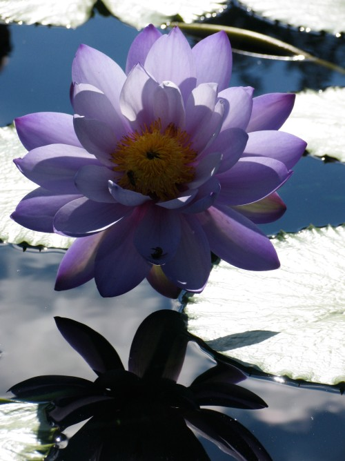 Water Lily, Somewhere in Texas (photo by Kath Usitalo)