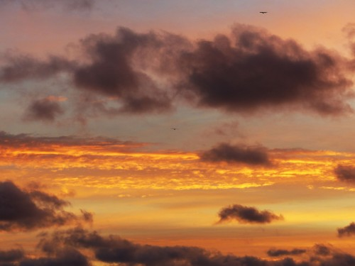 Can you see the two eagle soaring at dawn over Lake Michigan in the Upper Peninsula?